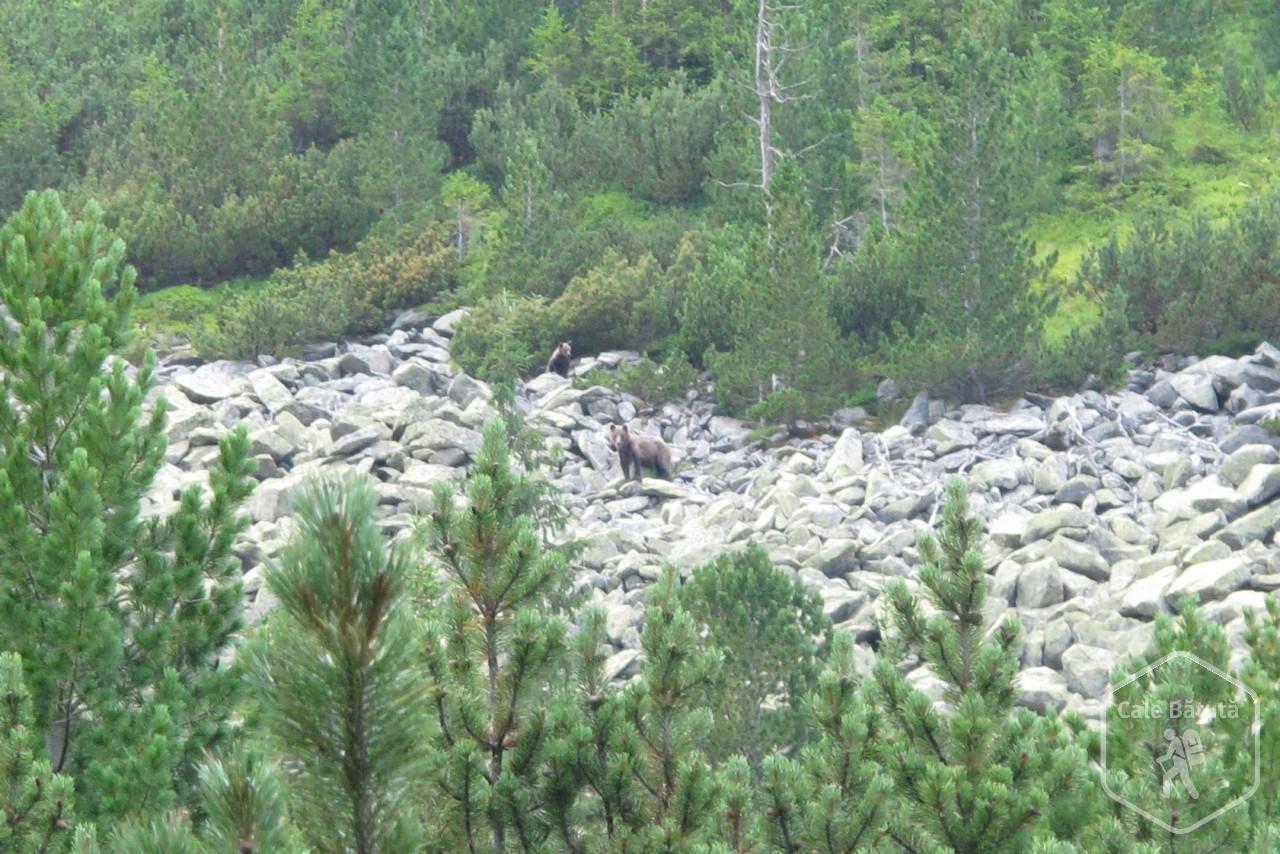 Incursiune pe teritoriul ursului din Munții Retezat